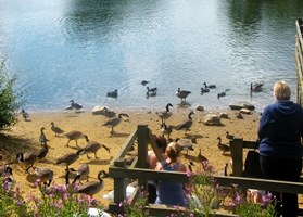 Daventry Country Park ducks 280.jpg